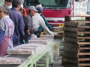 コンベヤーによって運ばれる船凍イカが荷揚げされる様子